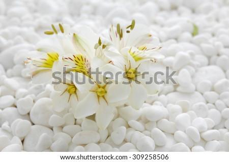 gardenia with white pebbles - stock photo