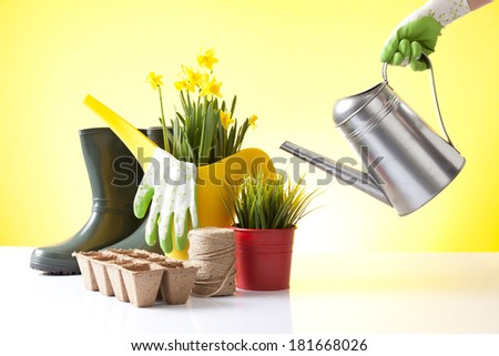 gardening concept with a person watering spring flowers - stock photo
