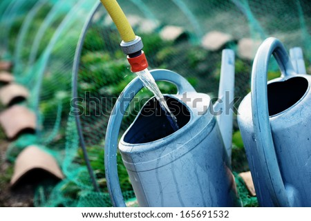 Gardening, fill watering can of water for watering the plants in garden. Safety net against birds background - stock photo