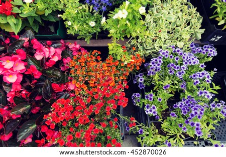 gardening, flowers and sale concept - close up of flower seedlings at street market - stock photo