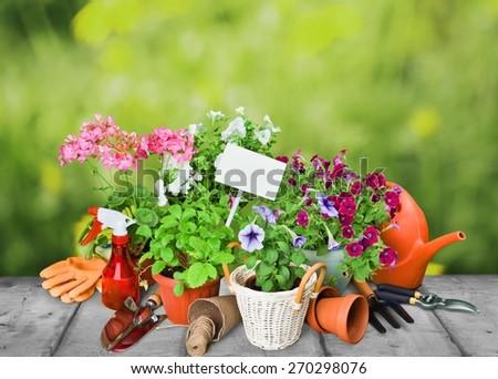 Gardening. Gardening tools and flowers  - stock photo