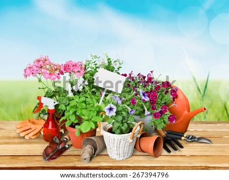 Gardening. Gardening tools and flowers isolated on white - stock photo