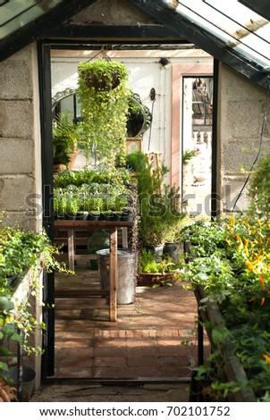 Gardening   Greenhouse Interior