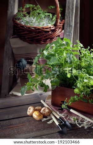 Gardening in the country - barn setting with herbs, seedlings, garden tools and and flower bulbs, rustic style - stock photo