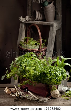 Gardening in the country - barn setting with herbs, seedlings, garden tools and flower bulbs, rustic style - stock photo
