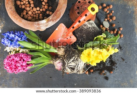 gardening in the springtime, potting flowers, flat lay