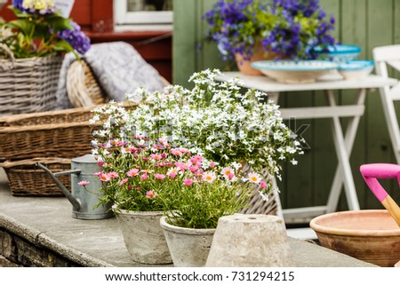 Gardening nature concept closeup beautiful little stock photo gardening nature concept closeup of beautiful little white pink flowers daisies in pots mightylinksfo