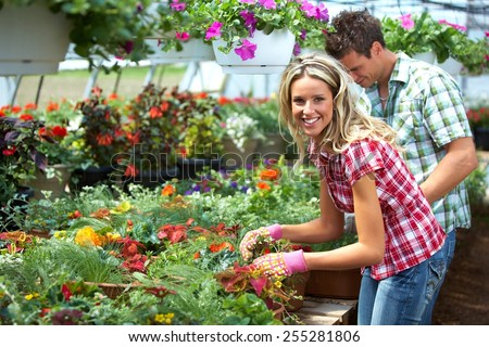 Gardening people. Couple working in greenhouse with flowers. - stock photo