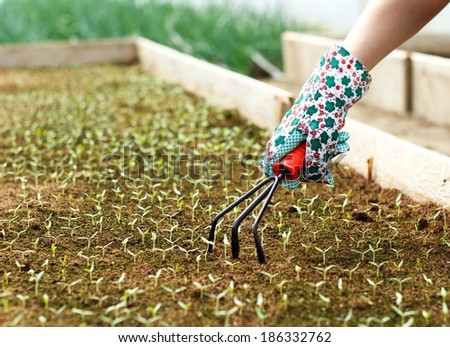 Gardening the seedbed with little rake. - stock photo