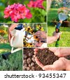 Gardening theme or collage.Representing fertility and growing plants - stock photo