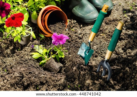 Gardening tools and flowers in the garden. Watering can, rubber boots,  flowers, vases,  garden tools, rubber gloves. Gardening composition. Garden, green bushes, yield ground. Working in the garden.
