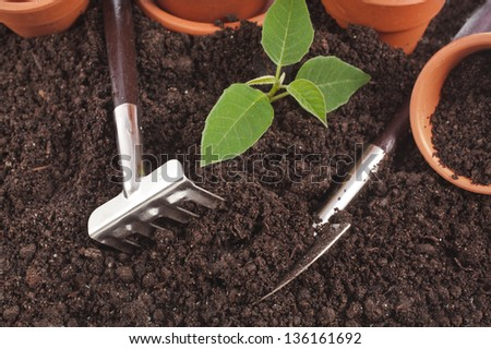 gardening tools and seedling in soil surface background - stock photo