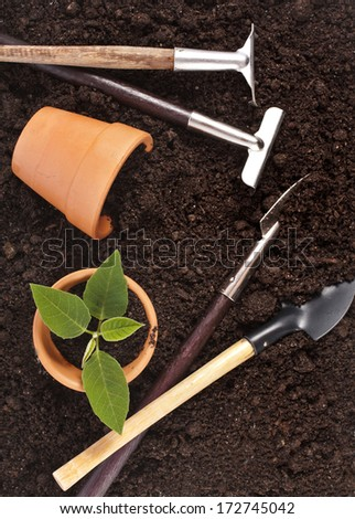 gardening tools and seedling in soil surface background