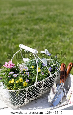 Gardening tools and seedlings - stock photo