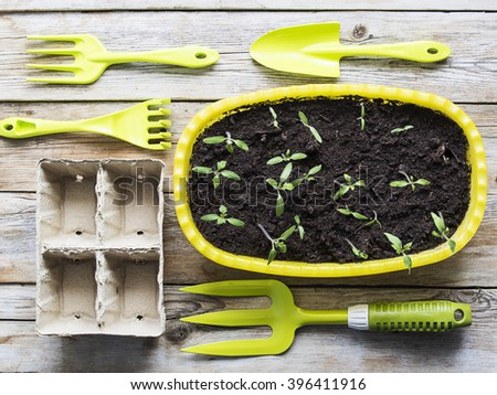 Gardening tools, cardboard pots and seedlings in flowerpot