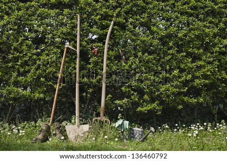 gardening tools leaning on hedge - stock photo