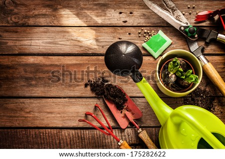Gardening tools, watering can, seeds, plants and soil on vintage wooden table. Spring in the garden concept background with free text space. - stock photo