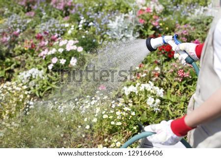 Gardening watering - stock photo