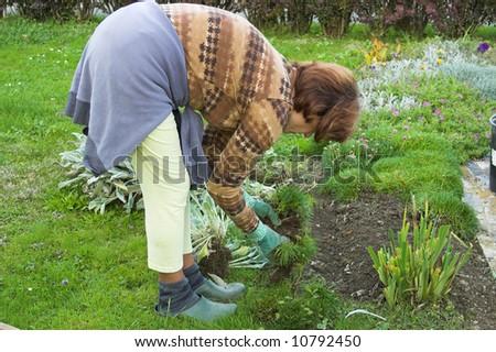gardening woman - stock photo