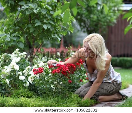 Gardening - woman cutting the rose bush in the garden - stock photo