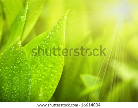 Gardens grass with the lilies of the valley, sunny morning (shallow dof) - stock photo