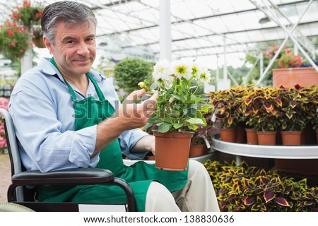 Gardne center worker in a wheelchair holding a flower pot in a greenhouse - stock photo