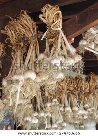 Garlic bulbs hanging and drying outdoor      - stock photo