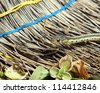 Garter snake crawling on an old broom. - stock photo