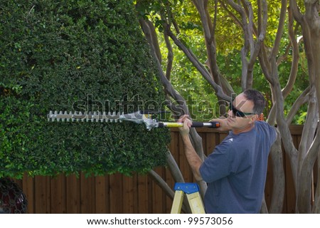 gas-powered trimmer on yaupon holly tree - stock photo