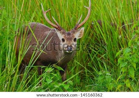 Gazelles in forest - stock photo
