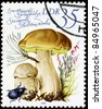"GDR - CIRCA 1980: A Stamp printed in GDR shows image of the Boletus edulis, from the series ""Edible Mushrooms"", circa 1980 - stock photo"