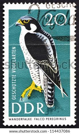 GDR - CIRCA 1967: a stamp printed in GDR shows Peregrine Falcon, Falco Peregrinus, Bird of prey, Protected Birds, circa 1967 - stock photo