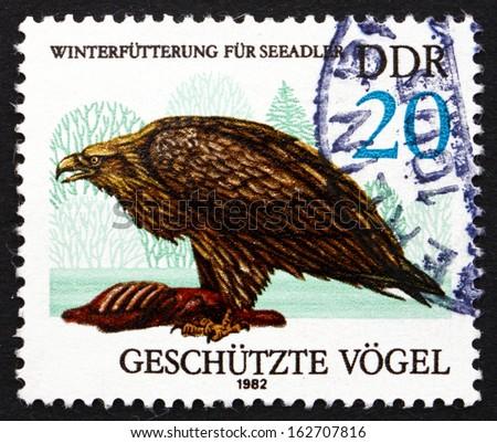 GDR - CIRCA 1982: a stamp printed in GDR shows Sea Eagle, Haliaeetus Albicilla, Bird of Prey, circa 1982 - stock photo
