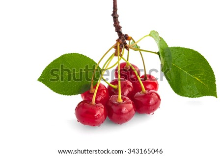 Gean - sweet cherry berries. Isolated on white background.