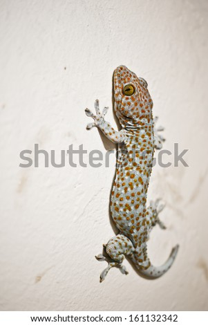 Gecko - stock photo