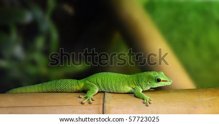 gecko - stock photo