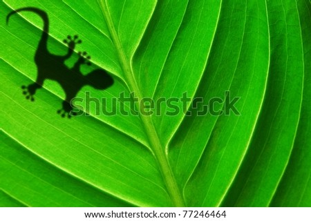 gecko shadow on green leaf texture showing nature concept with copyspace - stock photo