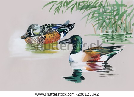 Geese flock swimming on pond watercolor illustration - stock photo
