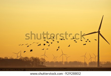 Geese flying at dawn in winter - stock photo