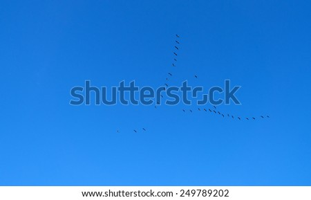 Geese flying in a blue sky in winter - stock photo