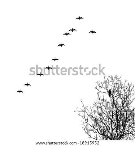 geese in sky and crow on tree - stock photo