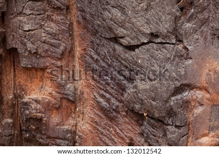 General Grant Grove is a section of Kings Canyon National Park - stock photo