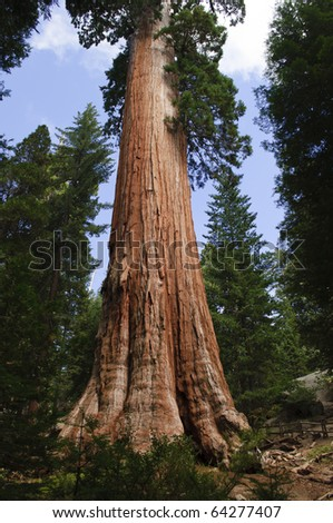 General Grant Tree in Kings Canyon National Park, California.
