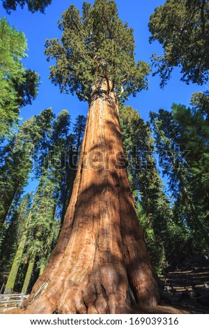 General Sherman - the largest tree on Earth, Sequoia National Park. - stock photo