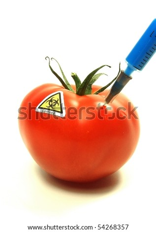 Genetic experiment with red tomato
