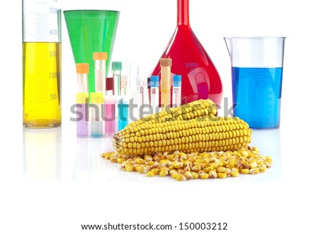 Genetically modified organism - maize and laboratory glassware on white background  - stock photo