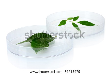 Genetically modified plants tested in petri dishes isolated on white - stock photo