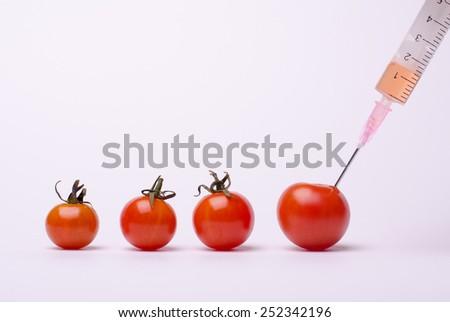 Genetically modified tomatoes - stock photo