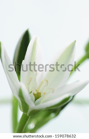 Gentle white flower