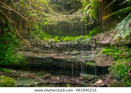 Gentle woodland waterfall cascading over rocks amongst ferns and moss